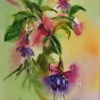 fuchsia's, 38 x 25 cm
